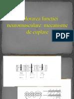 Explorarea funcţiei neuromusculare