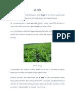 LA SOYA.pdf