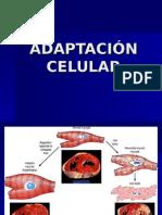 Adaptación Celular otro (2).ppt