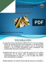 Caña de azúcar - Agronomia.pptx