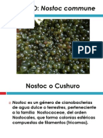 cushuro.pdf