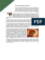 Funcionamiento del cerebro y la teoría sobre dominancia cerebral.docx