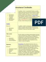 Estructuras Cerebrales.docx