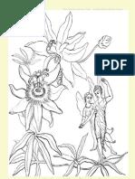 Fairy Tales Activity Unit Study Colour Pages