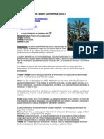 PALMA DE ACEITE proyecto.docx