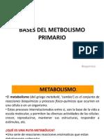 7. BASES DEL METBOLISMO PRIMARIO.1 (1).pptx