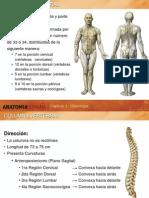 AnatomiaHumana_Columna.ppt