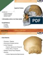 3. AnatomiaHumana Huesos del craneo II.ppt