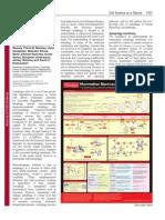 Macroautophagy.pdf