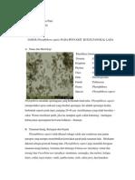 Phytoptora capsici