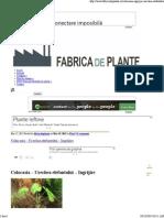 Ingrijire Planta Colocasia
