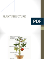 plant structure.pptx
