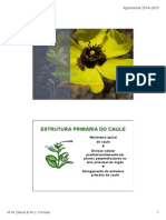 BOTANICA - CAULES ( T ).pdf