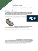 Estructura y función celular.docx