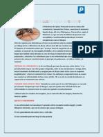 periodico completo.pdf