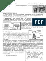 Guía SNC.doc
