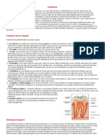 DENTICION.doc