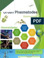 Entomología Phasmatodea.pptx