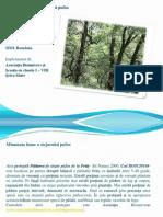 minunata-lume-a-stejarului-pufos.pdf