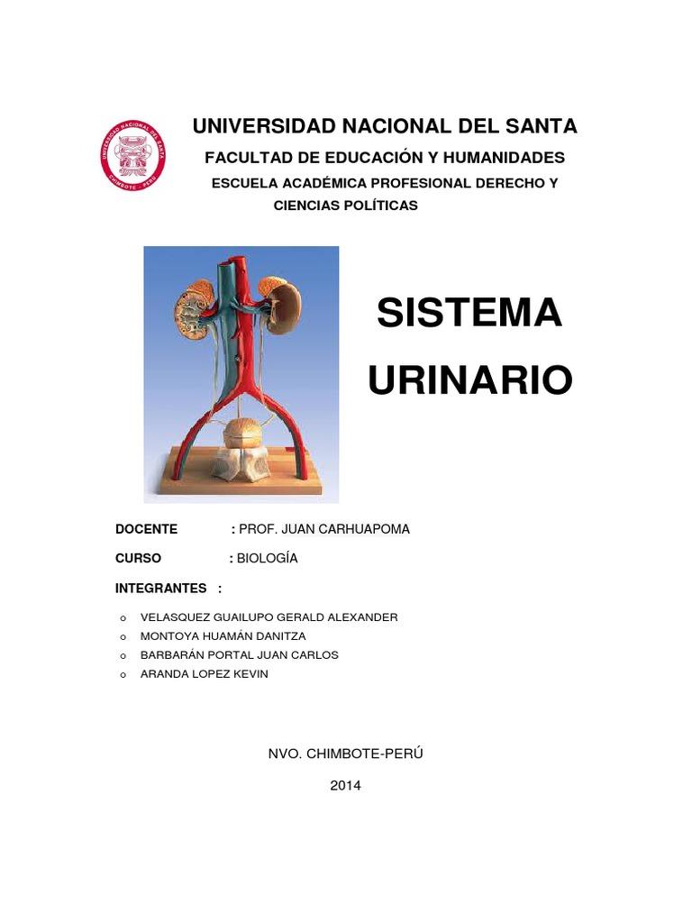 INFORME SISTEMA URINARIO.docx