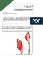 ..__MÚSCULOS POR CONTENIDOS__..pdf
