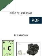 CICLO DEL CARBONO MAESTRIA.pptx