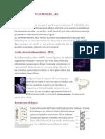 ESTRUCTURA Y FUNCION DEL ADN.docx