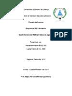informe 10 electroforesis  de agarosa final.doc