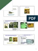 cl_s8_ALC_castano_opio_Parte_1 (1).pdf
