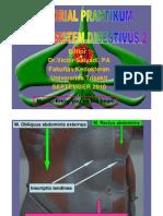 PDF Tutorial Praktikum Model Sistem Digestivus