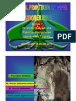 PDF Tutorial Praktikum Cadaver Abdomen Pelvis Revisi 2010