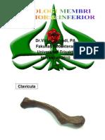 PDF Tutor Praktikum Osteologi Membri Superior & Inferior