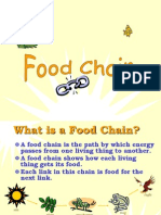 food chain.ppt