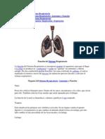 Función del Sistema Respiratorio.docx