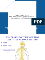 TheNervousSystem.ppt