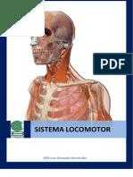 actividades sistema locomotor.pdf