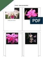Fichas orquídeas.doc
