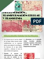DIFERENCIACION DE  PLANTAS.pptx