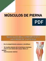 musculos de la pierna info.pptx