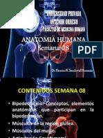 ANATOMIA SEMANA 08.ppt