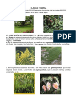 CLASIFICACION DEL REINO VEGETAL.docx