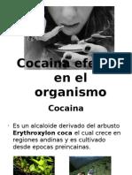 cocaina y sus efectos en el  organismo.odp