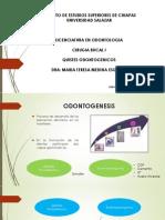 Quistes Odontogenicos Dra Medina.pptx