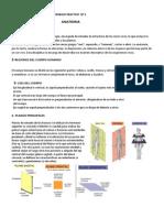 TRABAJO PRACTICO  Nº  ARTICULACIONES.docx