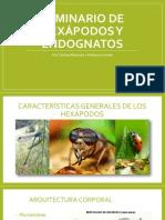 Seminario de hexápodos y endognatos.pptx