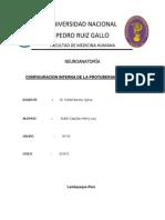 ESTRUCUTURA INTERNA PROTUBERANCIA ANULAR.docx