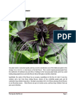 The Spooky Bat Flower.pdf