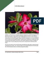 Growing  Adeniums in the Rainy Season.pdf