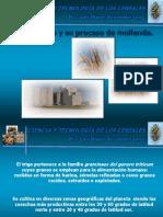 4- El trigo y su tecnolog+¡a.ppt