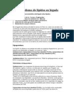 Metabolismo de lípidos en higado.doc